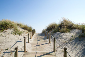 Wooden walkway in the dunes