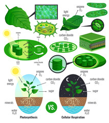 Biological Photosynthesis Infographic Elements