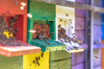 Bees flying to Colorful beehive