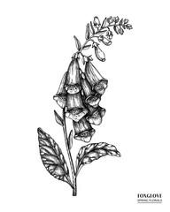 Obraz Vector foxglove drawing. Hand drawn floral illustration. Spring flower sketch. Vintage botanical elements. Black and white. - fototapety do salonu