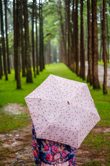 women traveler with umbrella in pine tree field