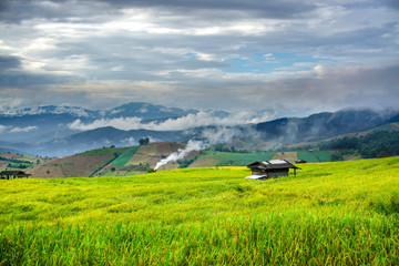 cottage in rice terrace with cloudy day