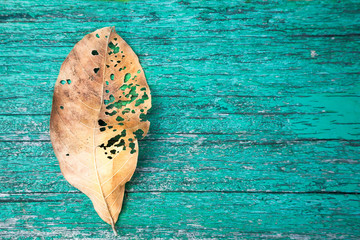 Brown dry leave on green aged wood background. nature and poem concept. flat top view