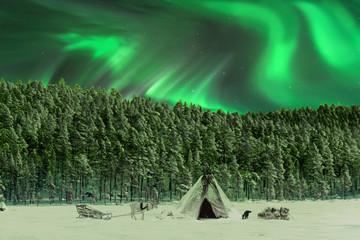 Rentier und Zelt im Polarlicht