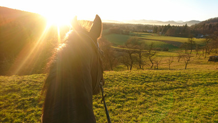 SUN FLARE: Golden sunbeams shine on the horse looking around the countryside.