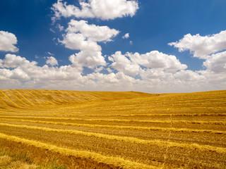 Wheat field after harvest in Cobos de Cerrato in Castilla y León