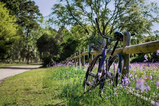 Purple bike in field of flowers