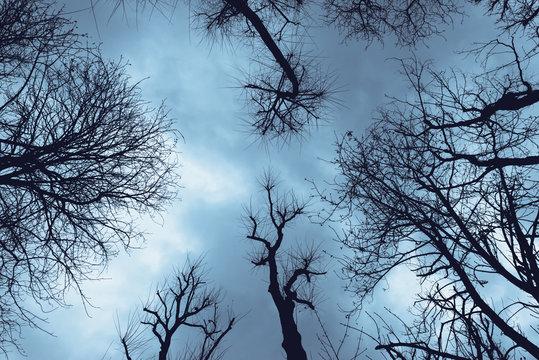 From below of leafless trees silhouette under dark blue sky, Spain