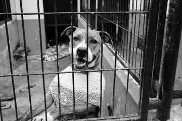 Fototapeta caged dog, with sad face