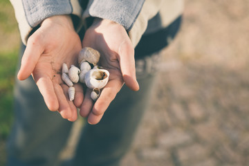 From above hands of anonymous person showing small seashells to camera on sunny day in nature