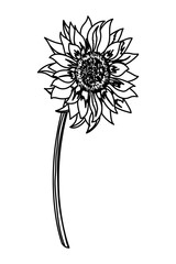 sunflower spring drawing