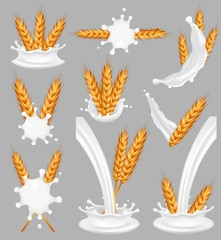 Rice milk splash set, vector realistic illustration