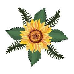 Wall Mural - beautiful sunflower drawing