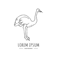 Hand drawn doodle ostrich icon Vector illustration Animal isolated on white background Australian national symbol Cartoon element Farm or wild bird silhouette