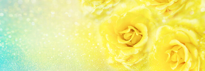 yellow roses flower soft romance background with beautiful glitter and copy space for header