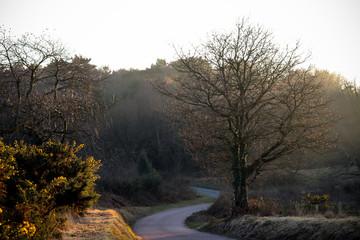 Woodbury Common, Devon