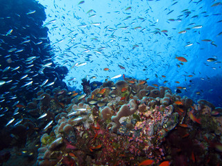 The amazing underwater world of the Red Sea.