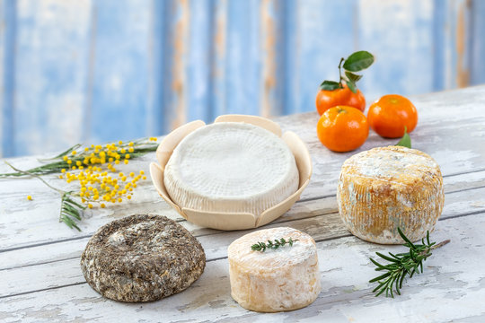 Board of Corsican traditional varity of goat and sheep cheese with mimosa flower, on a blue wooden background