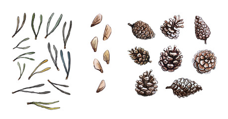 Hand drawn pine needles, cone, pine seeds set, clip art, isolated, watercolor realistic illustration. Woodland clipart.