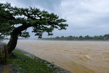 嵐山 増水した桂川