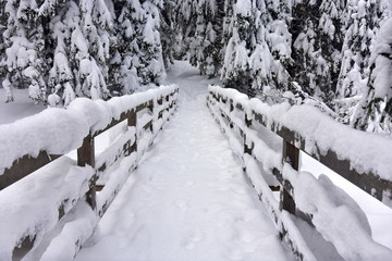 Dolina Koscieliska w Tatrach