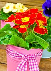 Springtime flowers and decoration
