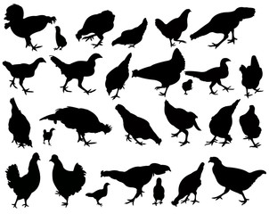 chcikens, roosters , silhouette vector