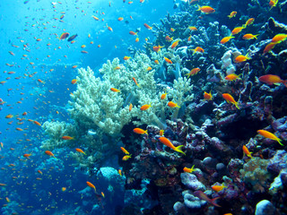 Amazing underwater world - Red Sea, Egypt.