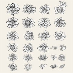 Set of vector flowers and leaves on a light background