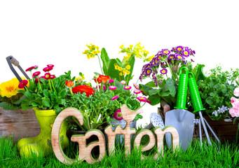 Blumen Isoliert Hintergrund