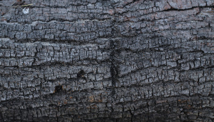 Beautiful old grunge wood texture. retro material painted with peeled paint. Stock background, photo