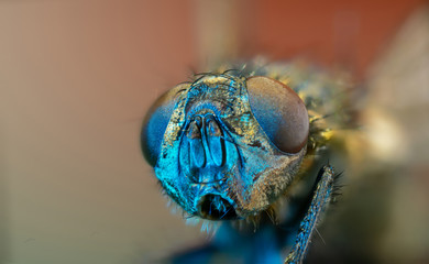 Macro photo  fly head