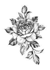 Hand drawn Composition with Rose Flower and Leaves