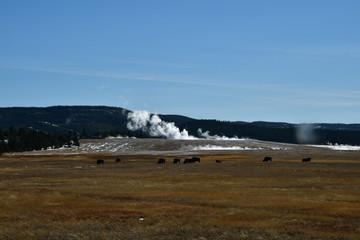 USA Nationalpark Yellowstone