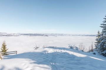 Snow mountain landscape on Tara mountain in Serbia.