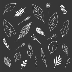 Isolated white hand-drawn botanical set on black chalk board