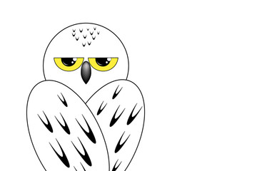 Snowy owl sits with his back on white background, isolate