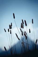 Grass against the sky and mountains