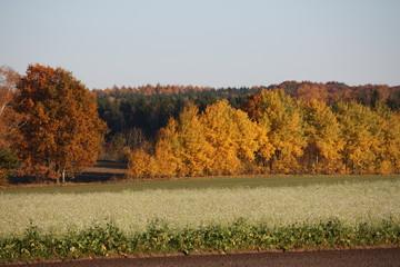 Herbst, Landstraße herbstlich mit fallendem Laub