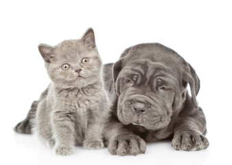 Little mastiff puppy dog lying with funny tiny kitten. isolated on white background