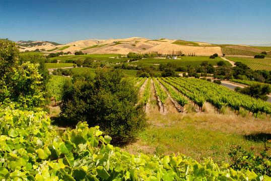 527-56 Carneros Vineyard & Hills