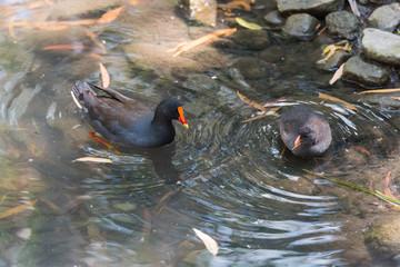 Vögel nehmen ein Bad im Tümpel