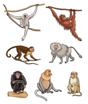 Set of different monkeys - vector illustration