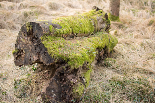 an old log with green moss over the surface