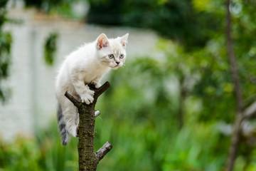 funny furry grey kitten cat on tree ready to jump