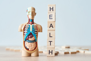 Human internal organs dummy and word health made of wooden blocks on a white background with copy space
