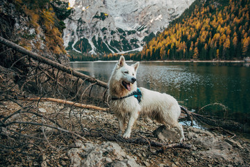 Dog at Braies
