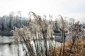 steyr river near steyr, upper austria