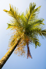 Bottom view on a beautiful palm tree against the sky.