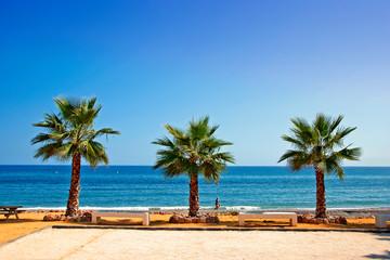Palm trees on Playa del Penoncillo beach Torrox Costa Andalusia Costa del Sol Spain Fototapete